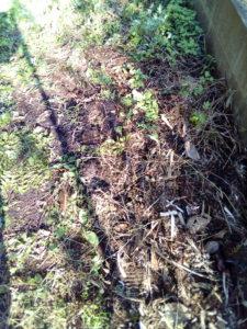 花壇を作る場所の作業前の写真